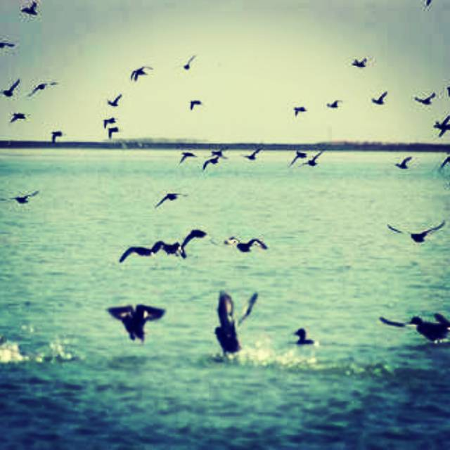 Priyanka Priyadarshini,India,Odisha,india,india,undefined,CHILIKA:Largest Wintering Ground For Migratory Birds,chilika-lake-priyanka-priyadarshini-8e710308e33-0-of-8