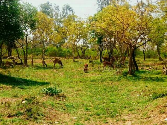 Bandipur Tiger Reserve And National Park